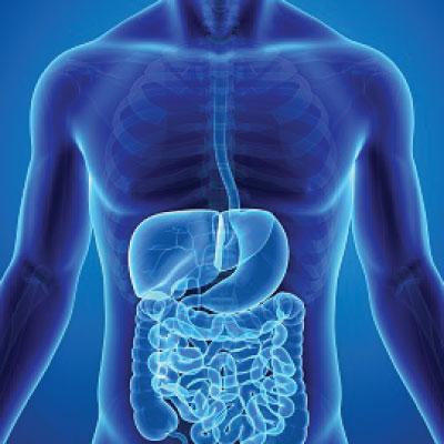 Gastroentrology