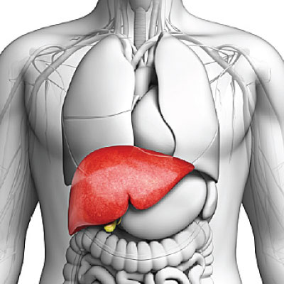 Liver Diseases and Liver Transplant